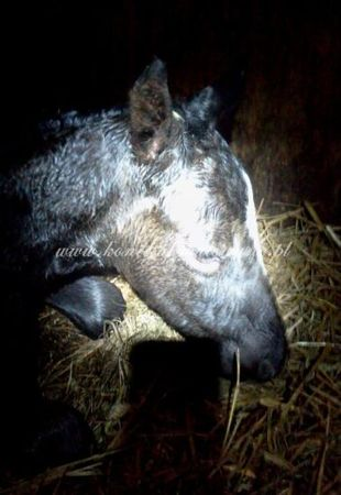 2012.04.14 - Pierwsza doba życia Starling