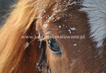 2012.12.24 Wigilijny śnieg