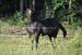 2012.11.22 Imiona konijakmalowanych